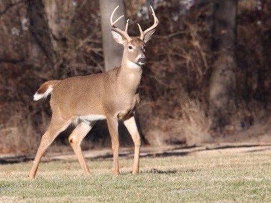 The November portion of Missouri's firearms deer season begins on Nov. 16.