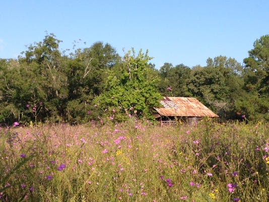 Birdsong Barn