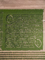 This corn maze at Limoneira Ranch in Santa Paula is organized by the Rotary Club of Santa Paula.