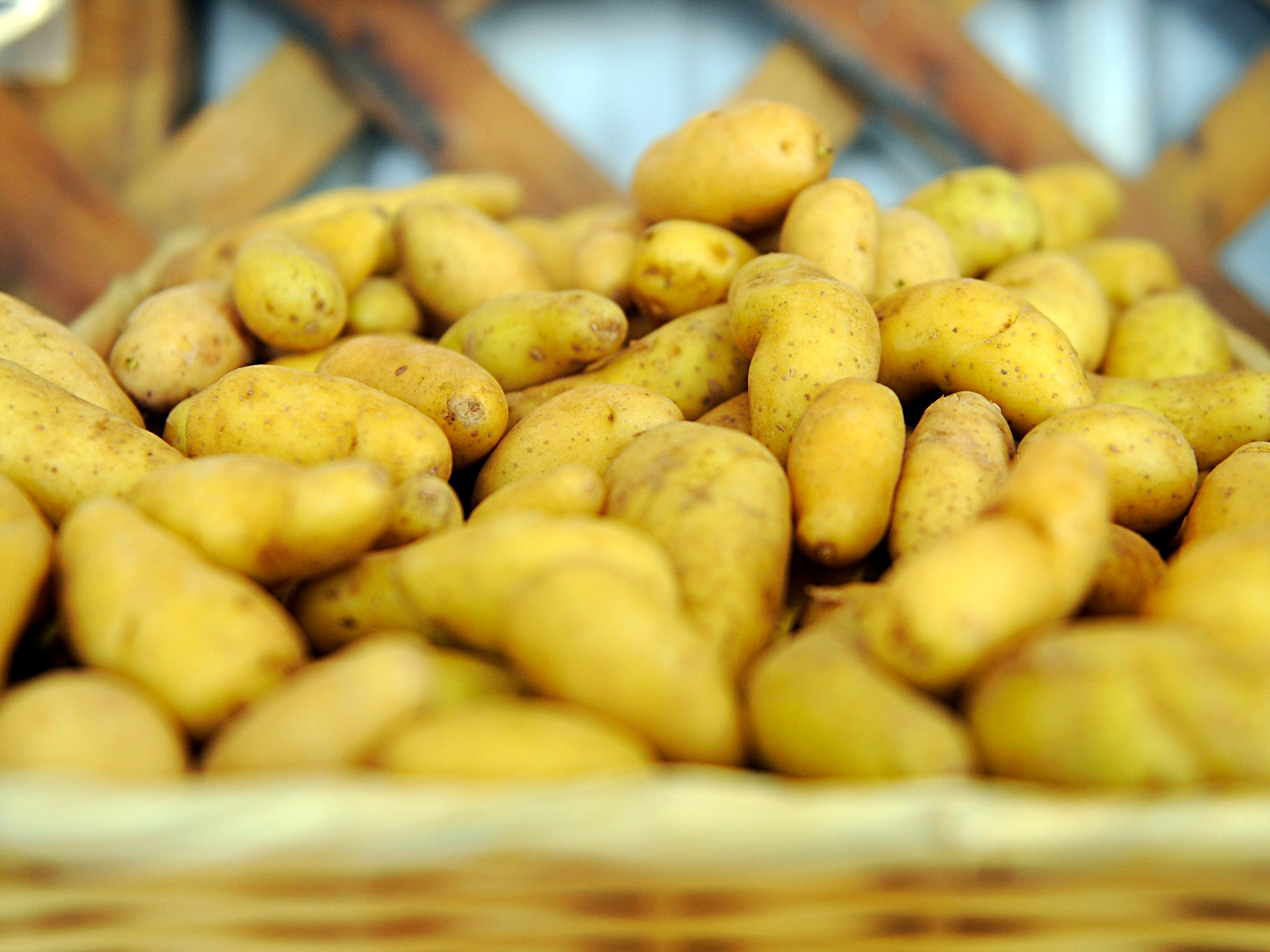 Fingerling potatoes available at Muzzarelli Farms on East Oak Road in Vineland on Thursday, October 4, 2018.
