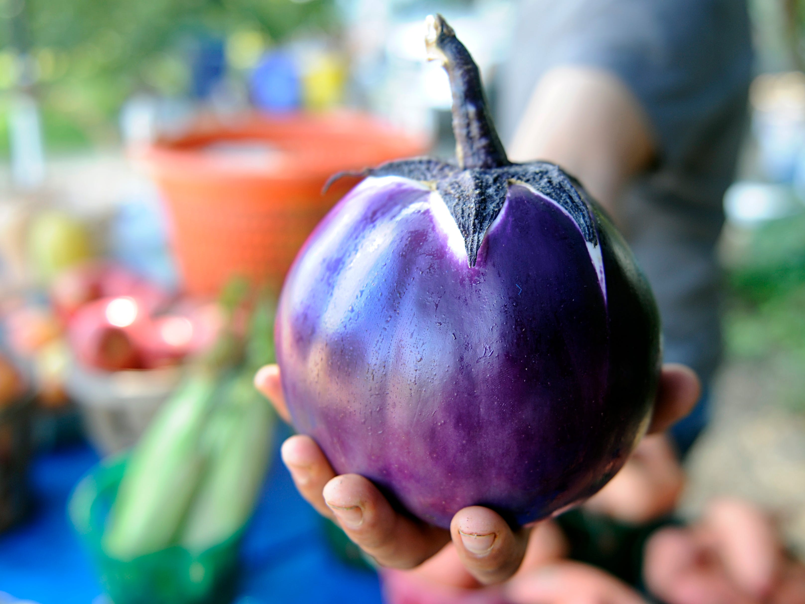 Farmer Dennis Santaniello, co-owner of Santaniello Farms on Oak Road in Vineland, holds a Sicilian eggplant that he sells at his roadside farm market.