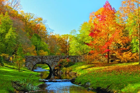 Peak fall colors are expected at Winterthur the third and fourth weeks of October 2018 when the russets, goldsand oranges of red oaks, black oaks, poplars and beeches will show at their best advantage.