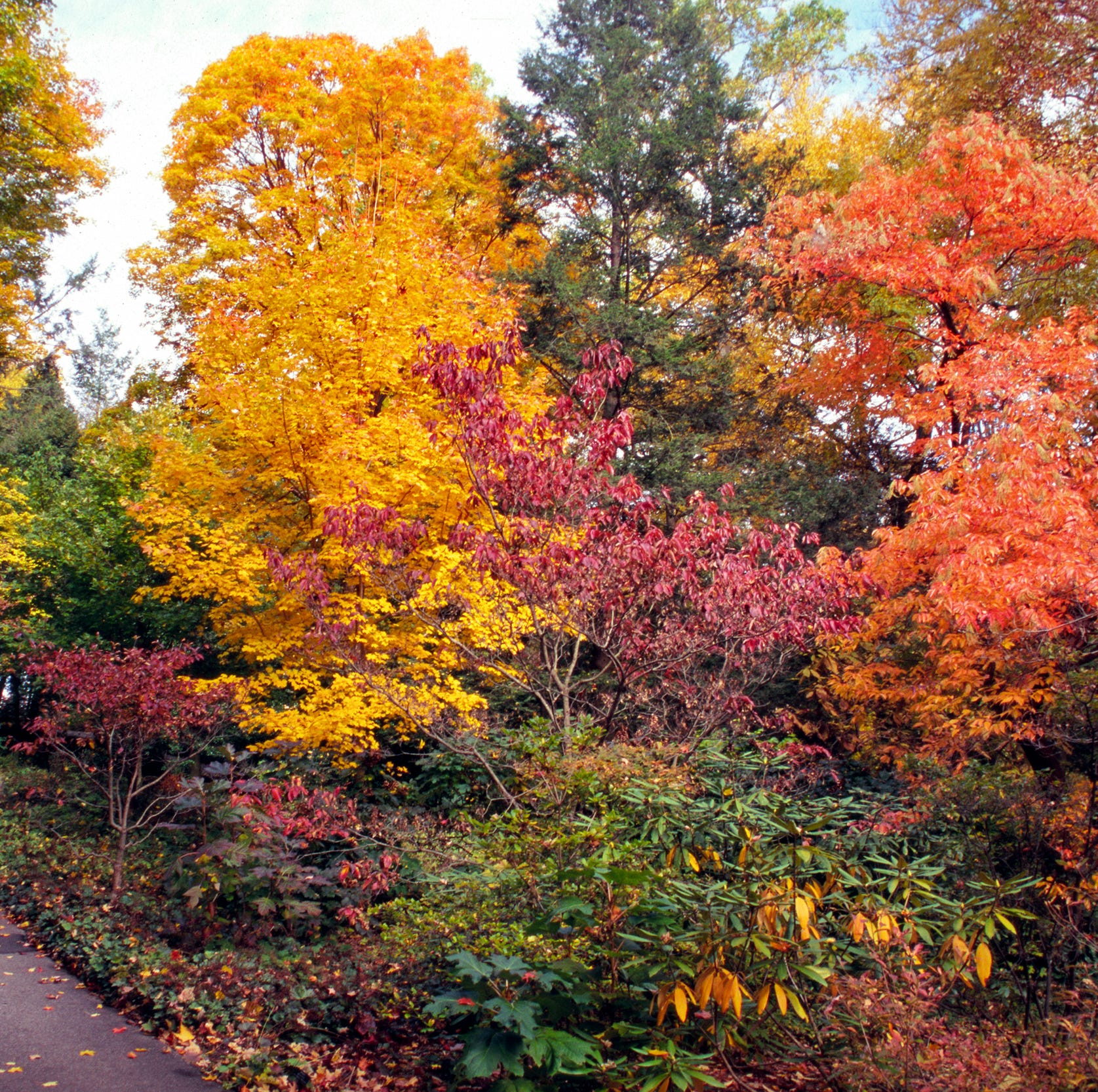 9 ways to rejoice in fall color in Delaware when it peaks the third week of October