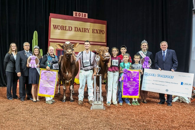 Maple Fudge Of 12 Oaks, owned by Colton and Ashley Brandel of Lake Mills, Wis. was named Grand Champion Female in the International Milking Shorthorn Show at World Dairy Expo® on Oct. 3.