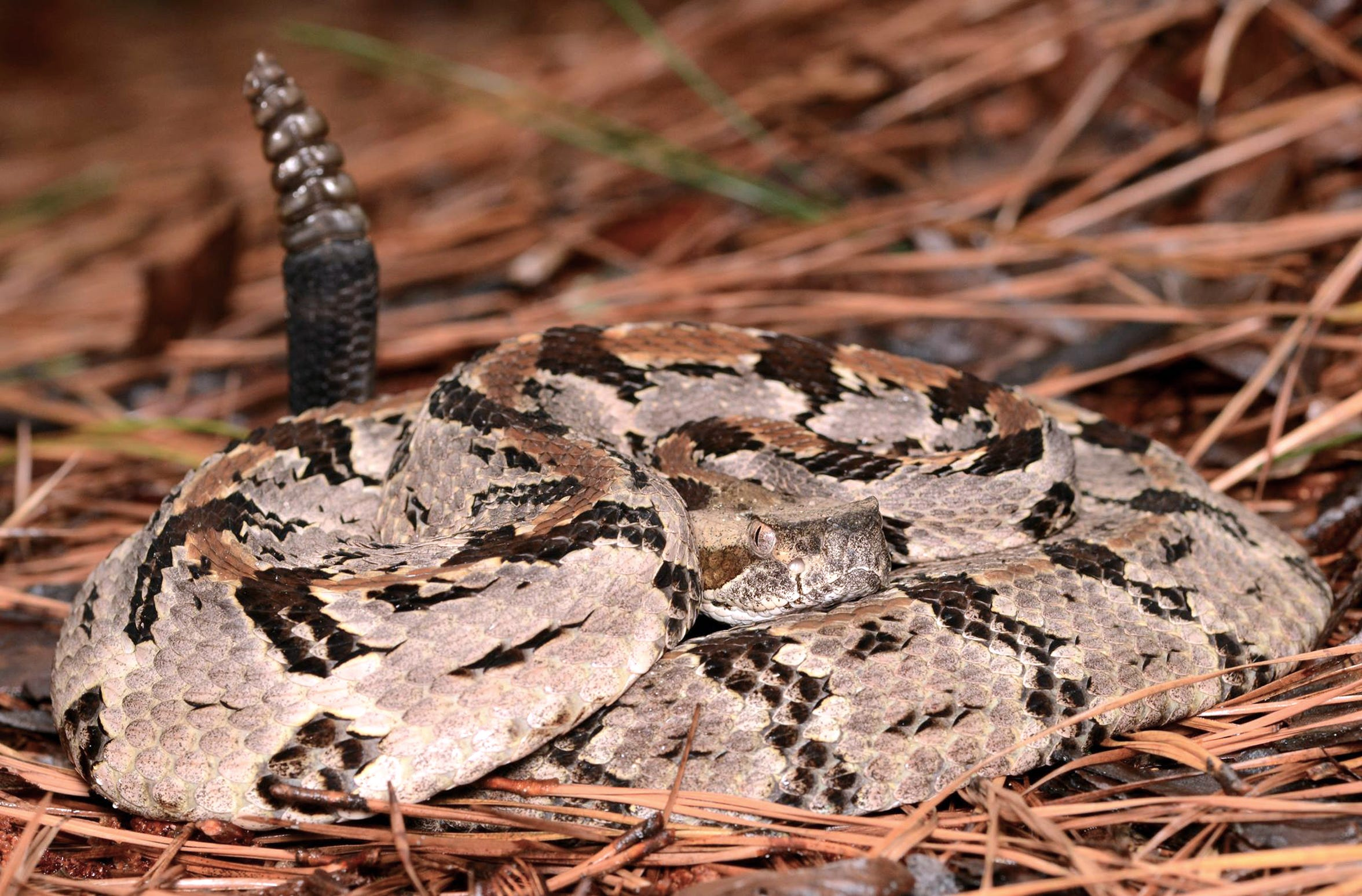 A man posted photos on Facebook of timber rattlers he had killed. Game wardens tracked him down and issued citations for killing a protected species.