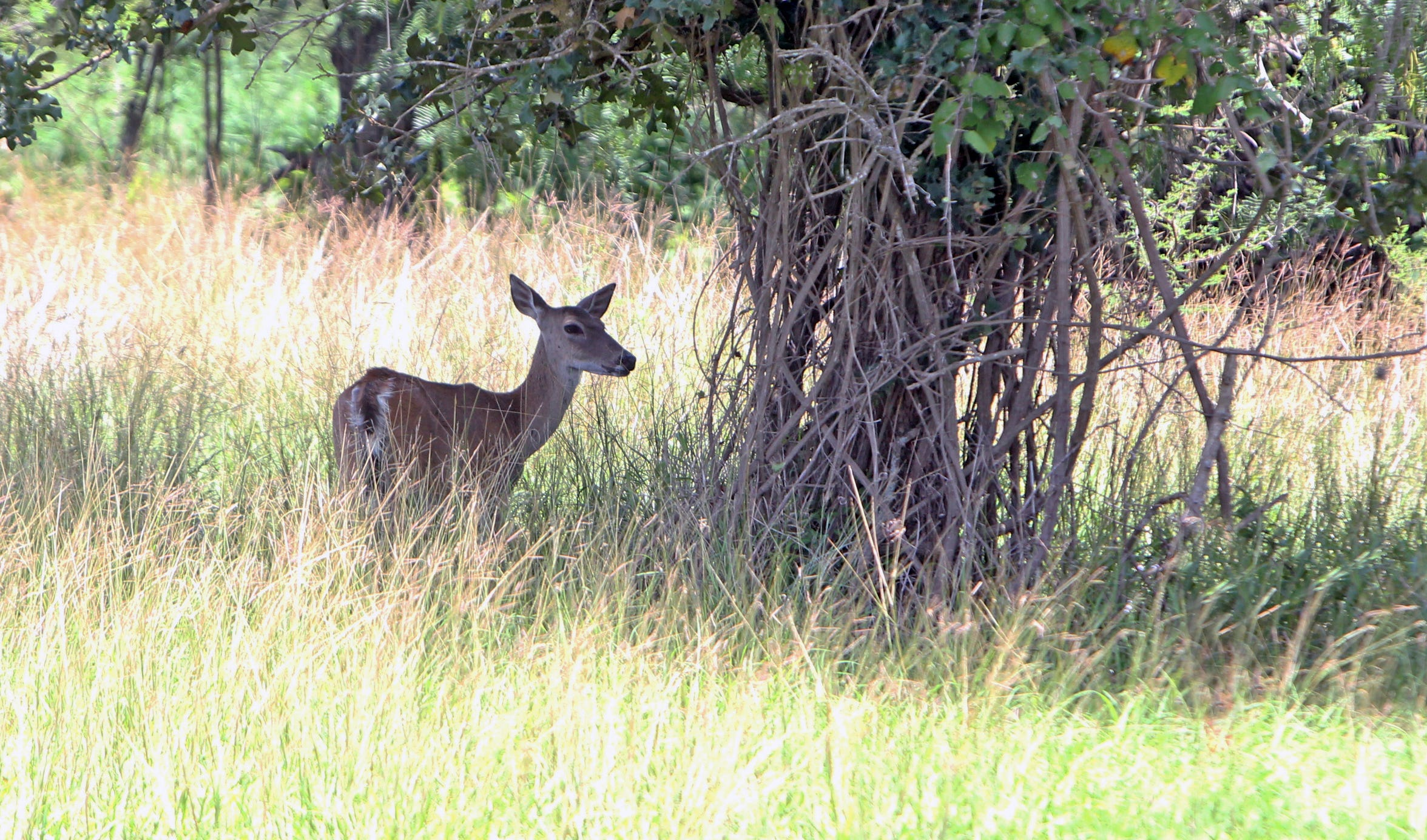 Game wardens near Lake Bob Sandlin recently issued citations to residents of a gated community  for taking of white-tailed deer during closed season, no hunting license, use of illegal archery equipment.