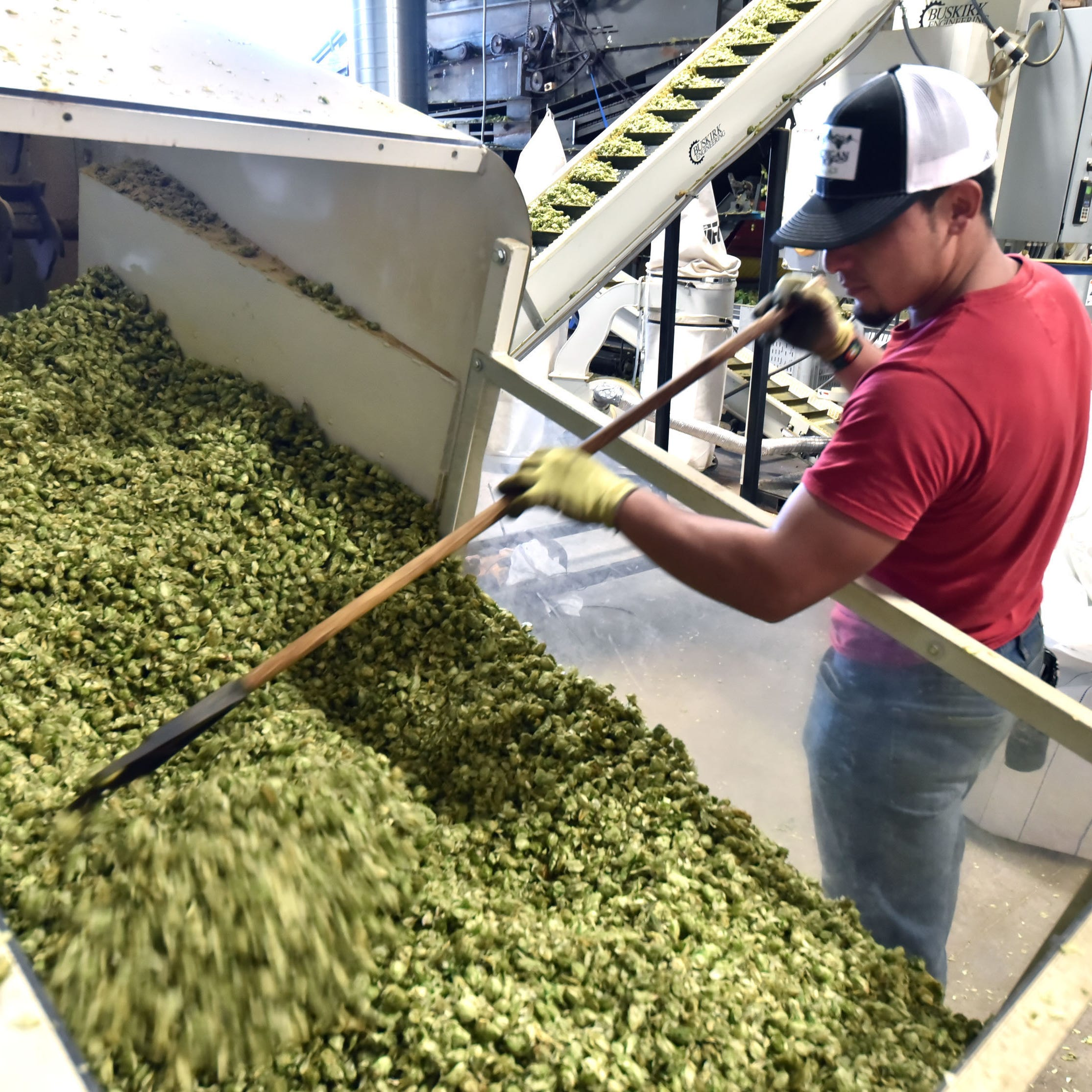 Craft beer fuels rise in Michigan hops growing