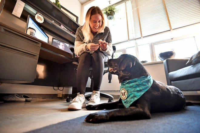 Sexual assault therapist Katelyn Maddock  works with victims in the MSU Sexual Assault Program on campus, assisted by Justice, a Labrador retriever available for hugs, kisses and belly rubs. A former Leader Dog for the Blind candidate, Justice  is training for her new career.