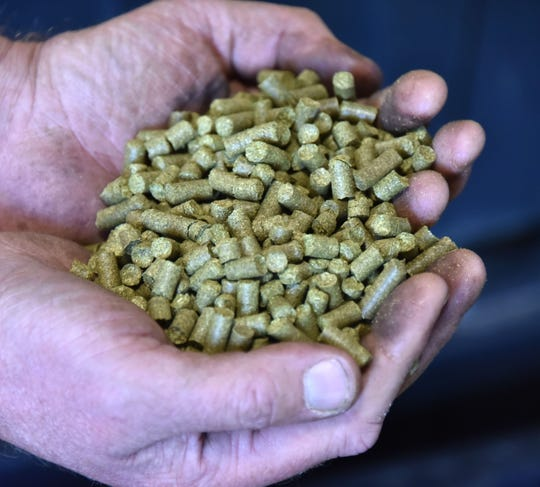 Hop cones, after being dried and shredded, are crushed into pellets for storage and delivery.