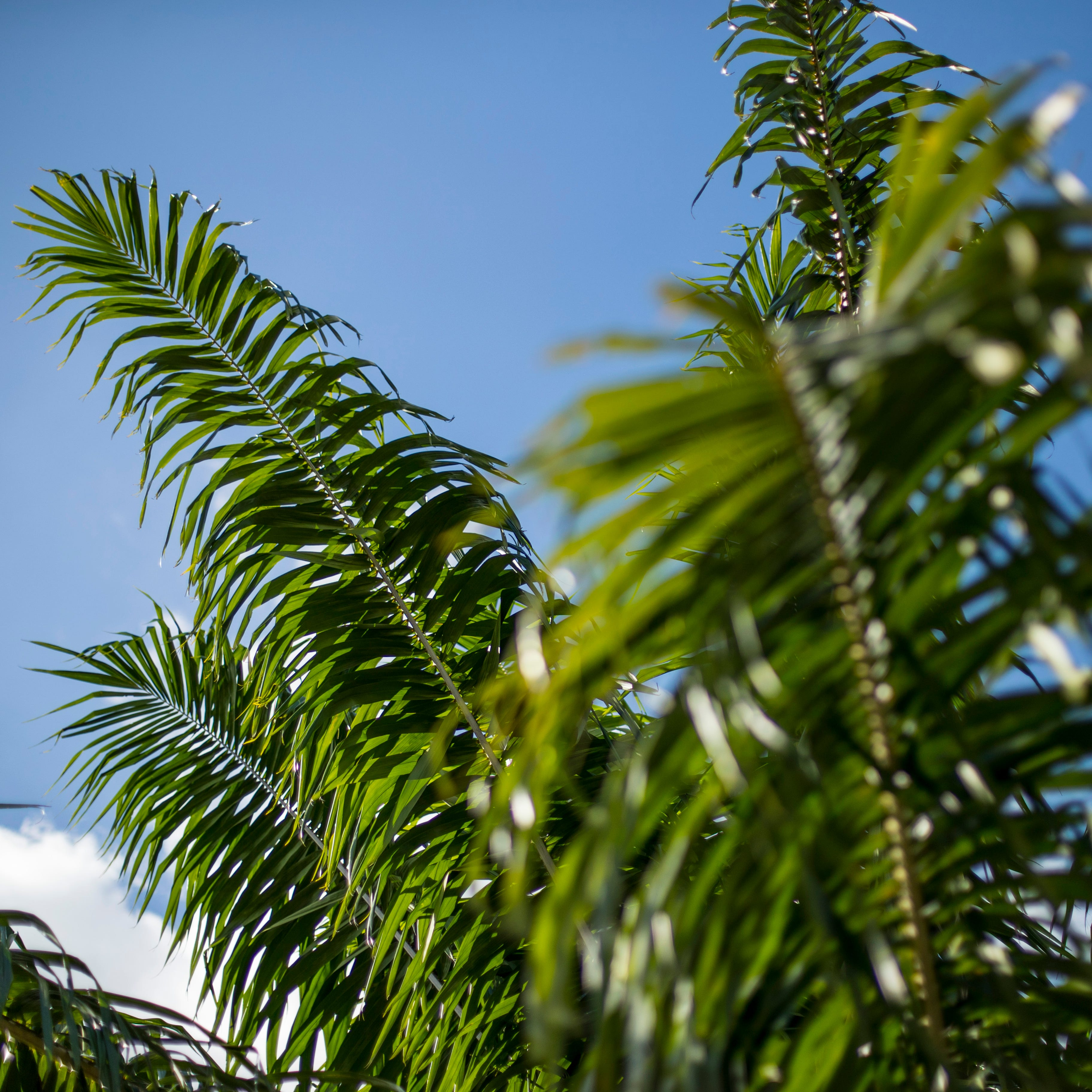 How much do you really know about palms in Florida? Test your Palm IQ