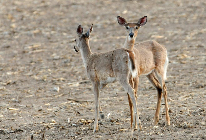 Nearly 17 years into Wisconsin's struggles with chronic wasting disease in white-tailed deer, lawmakers still aren't addressing basic CWD questions and challenges.