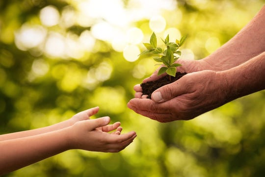 Plant a tree as a way to celebrate Earth Day.
