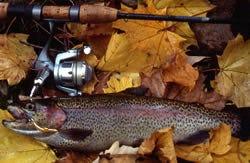 Fall trout season