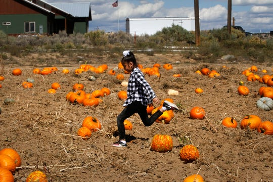Cindy Charley of Farmington runs through the pumpkin patch, Friday, Oct. 5, 2018 at Sutherland Farms in Aztec.
