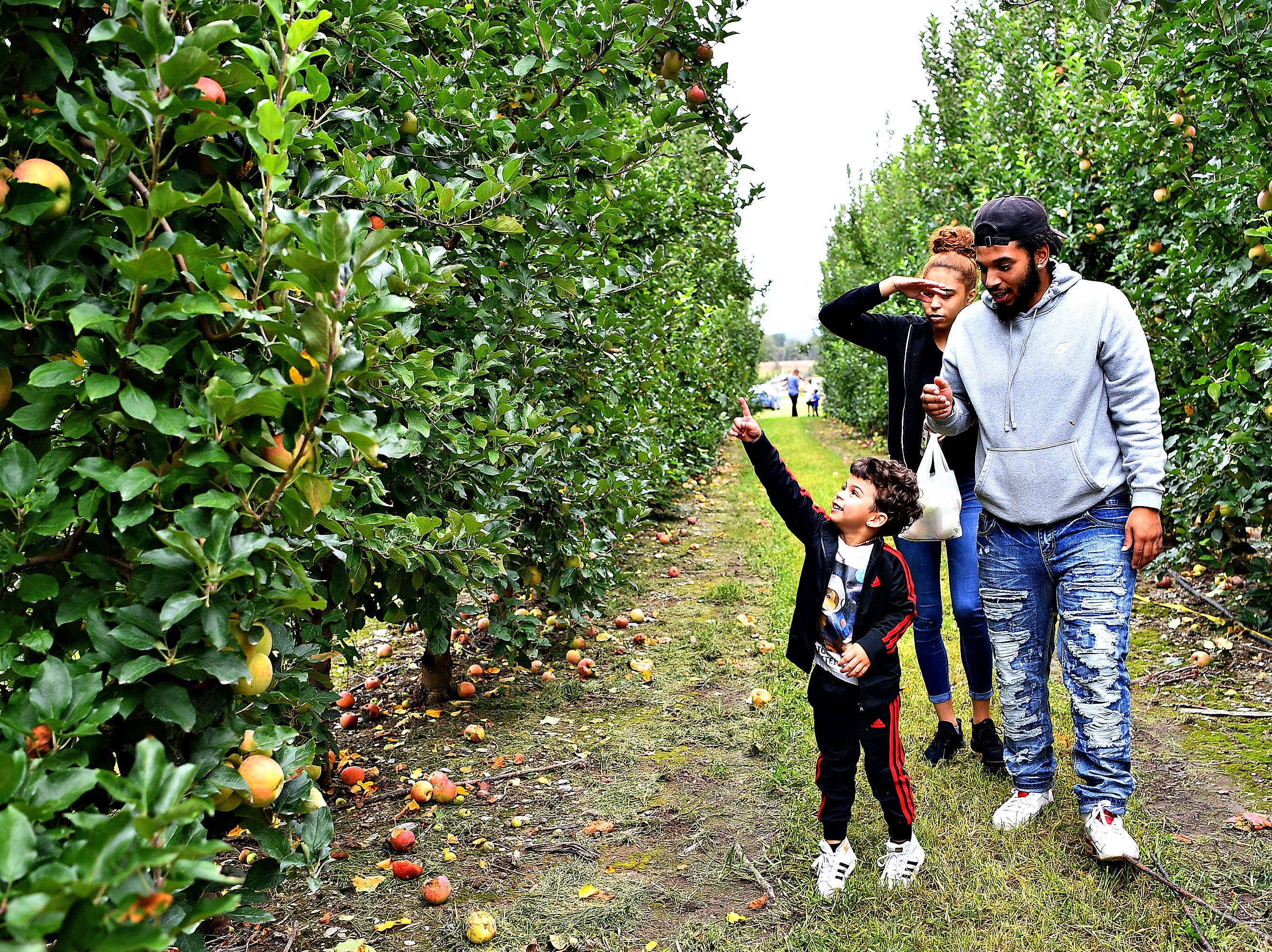 Front to back, Jordan-Drake Espaillat, 4, and his father Christopher Espaillat walk with Judy Barton, all of Dallastown, pick their own apples as they walk through the apple orchard at Flinchbaugh's Orchard & Farm Market in Hellam Township, Friday, Oct. 5, 2018. Dawn J. Sagert photo