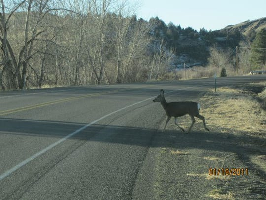 Deer and elk killed in traffic accidents can be salvaged in Oregon beginning Jan. 1, 2019.