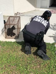 Ray, the cat, that police said a boy threw and kicked on Tuesday.