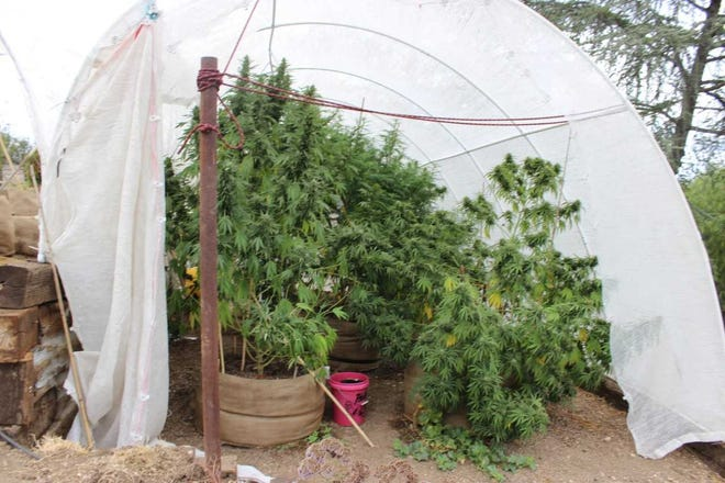 An investigation into suspected methamphetamine sales led police on Wednesday to uncover marijuana being illegally grown in a Thousand Oaks backyard.