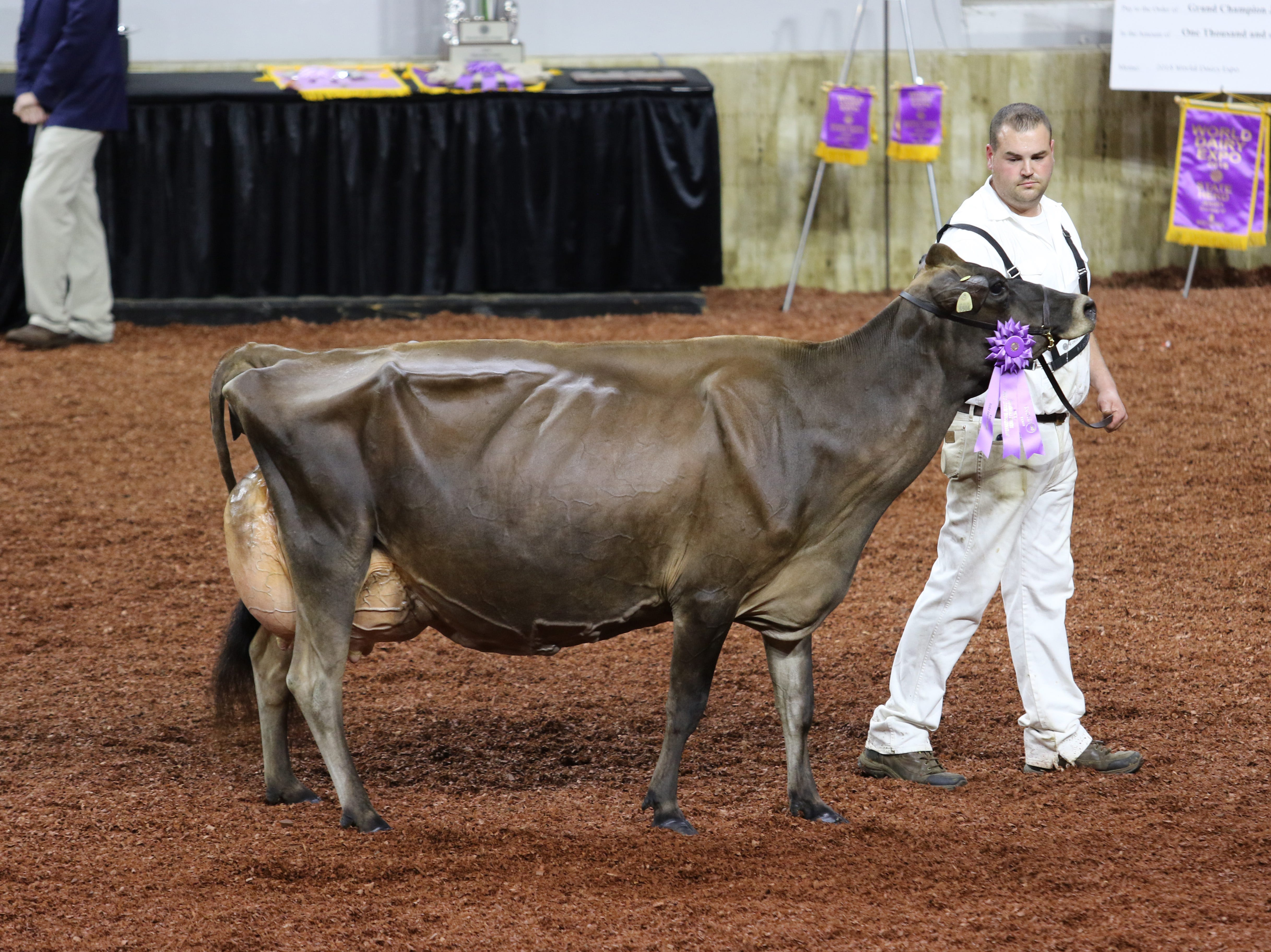 MB Lucky Lady Feliz Navidad-ET took home three titles at the 2018 International Jersey Show: the winning Four-Year-Old Cow, Senior Champion Female and Grand Champion Female.