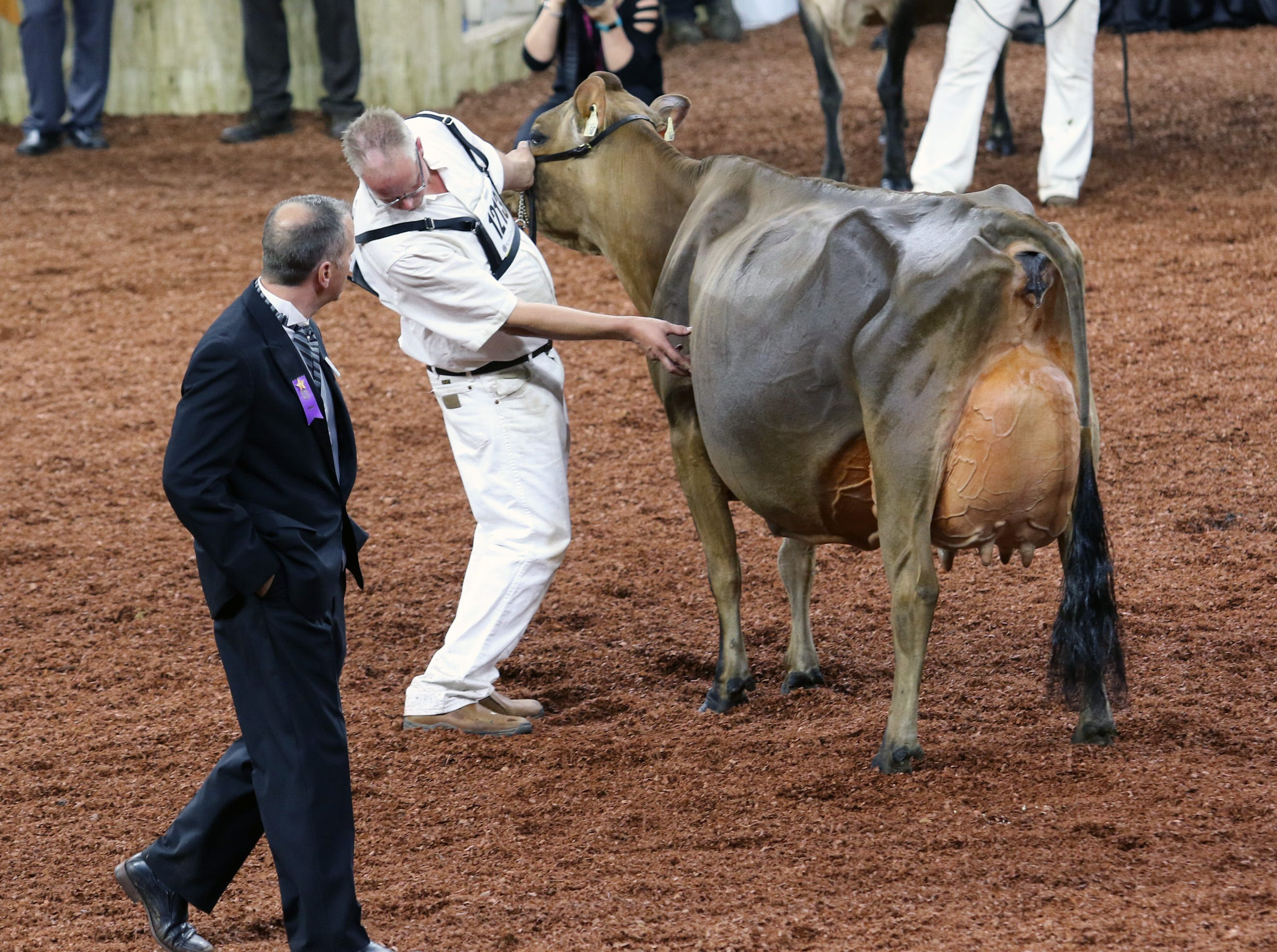 Judges study cows during international shows at World Dairy Expo in Madison on Oct. 3.