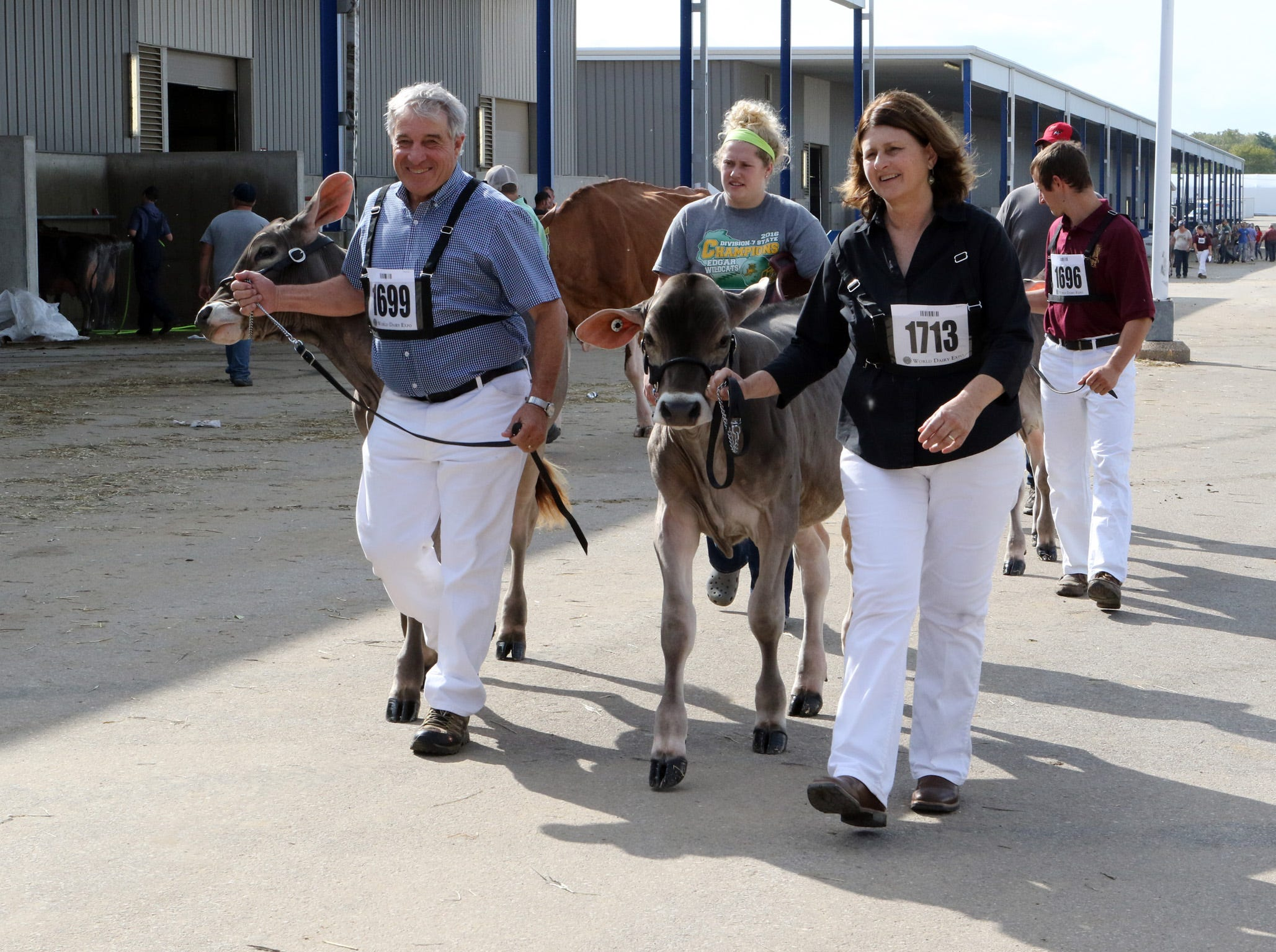 Heifers are lead to the show ring during World Dairy Expo on Oct. 3 in Madison.