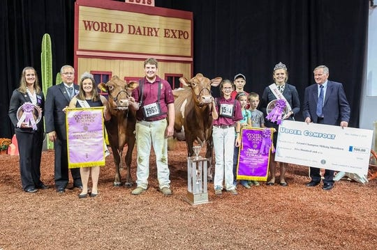 Grand Champion of the Junior International Jersey show was Maple Fudge of 12 Oaks, exhibited by Colton and Ashley Brandel of Lake Mills, Wis.