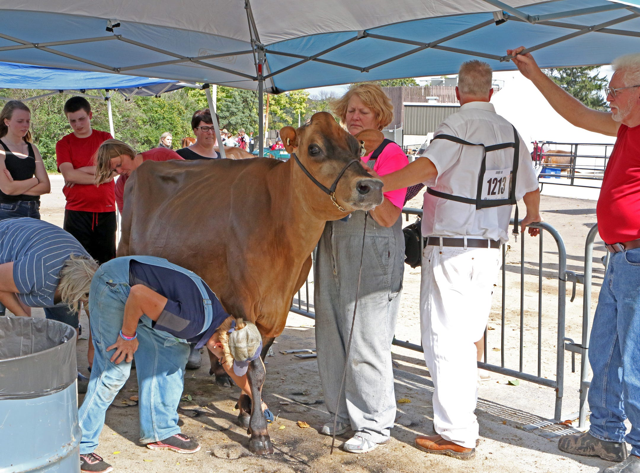 Cows are readied for photos after shows at the World Dairy Expo on Oct. 3 in Madison.