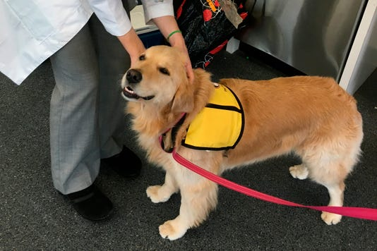 Ap Therapy Dogs Superbug A Usa Md