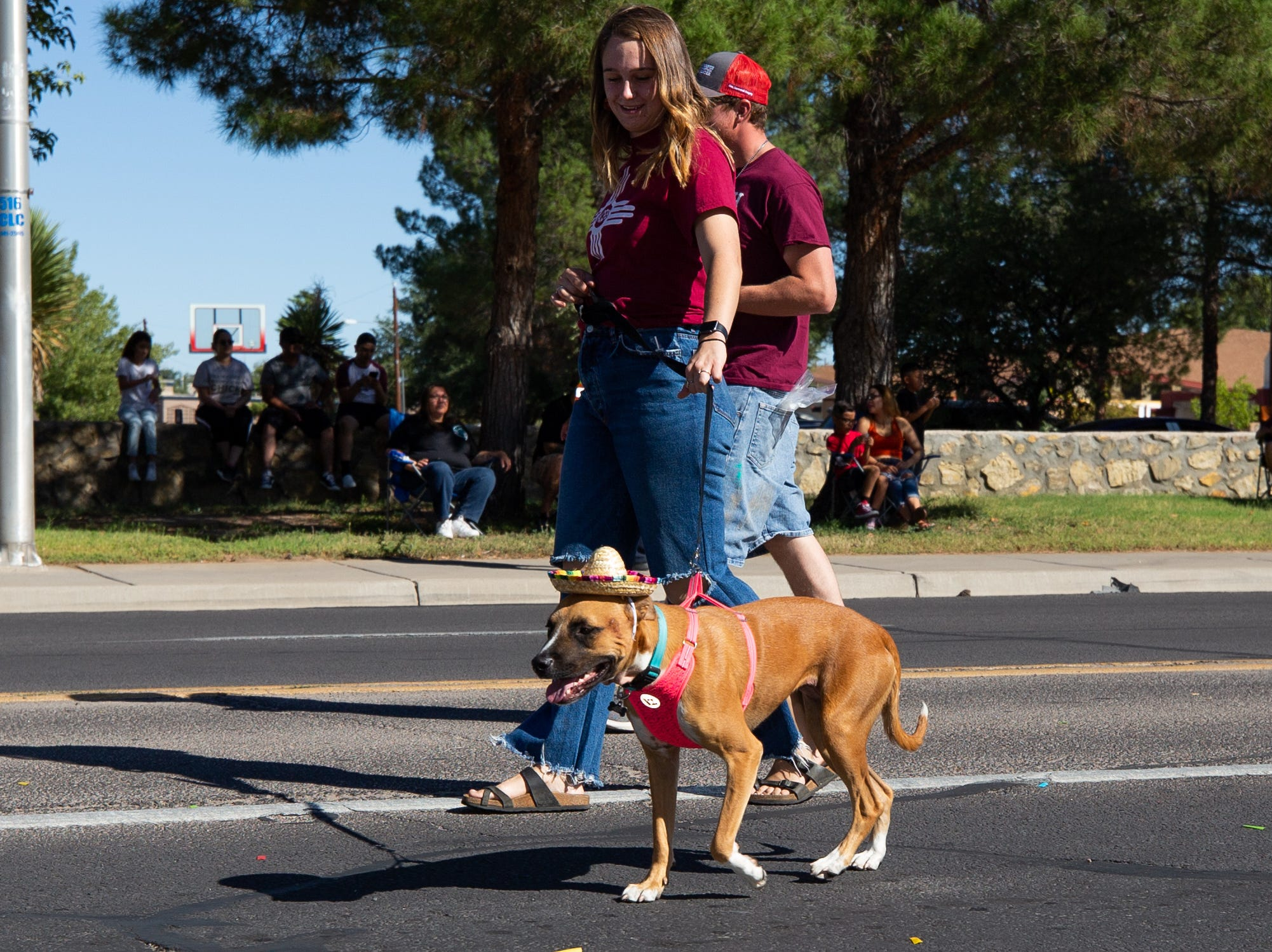 A sombrero wearing dog at the NMSU Homecoming Parade on October 6, 2018.