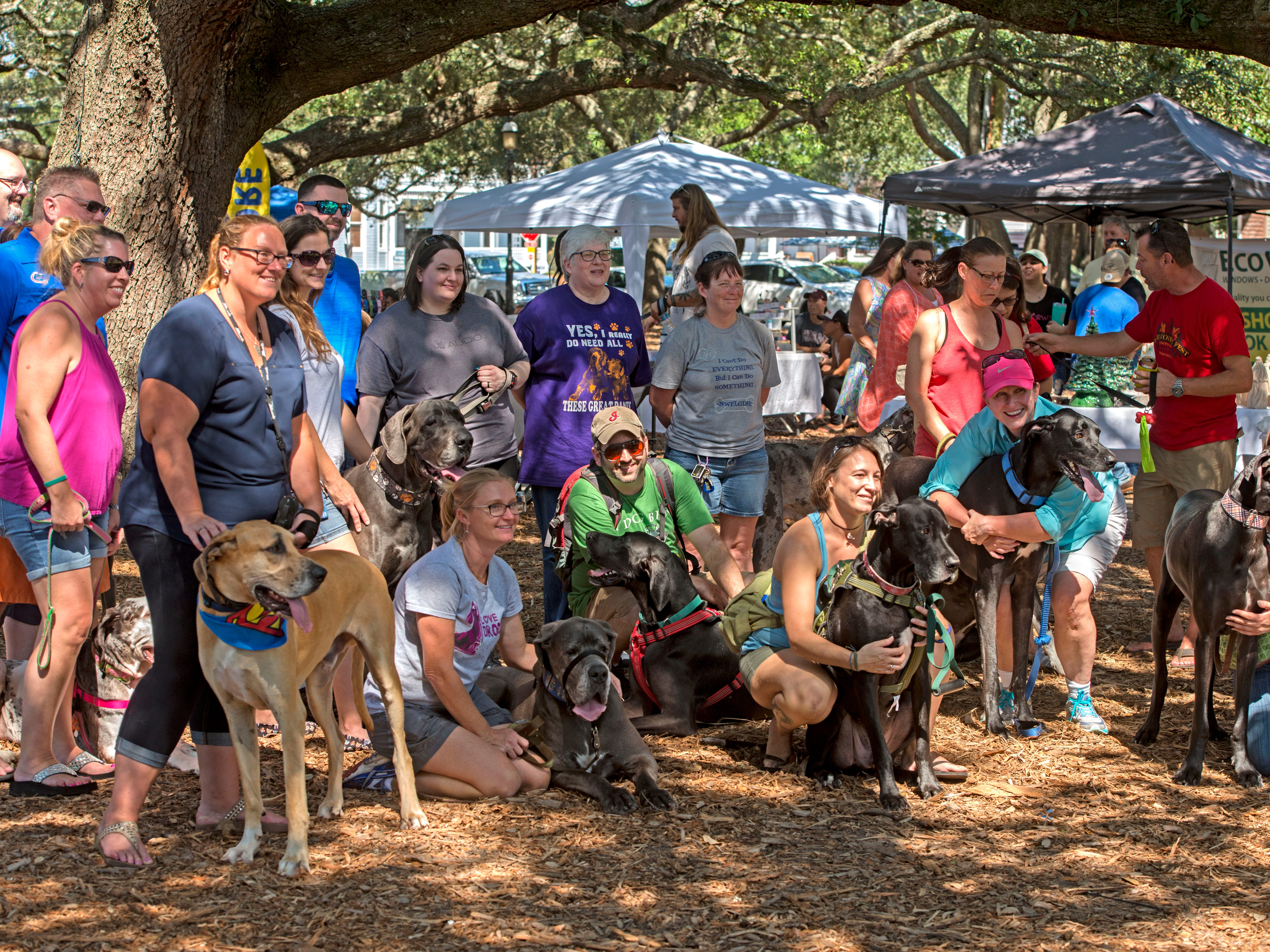 Great Dane owners pose for a family photo Saturday, October 6, 2018 during the third annual DaneTober Fest celebation and fundraising event at Seville Square. The event included music, per related merchandise,food and around two dozen aoptable Great Danes.