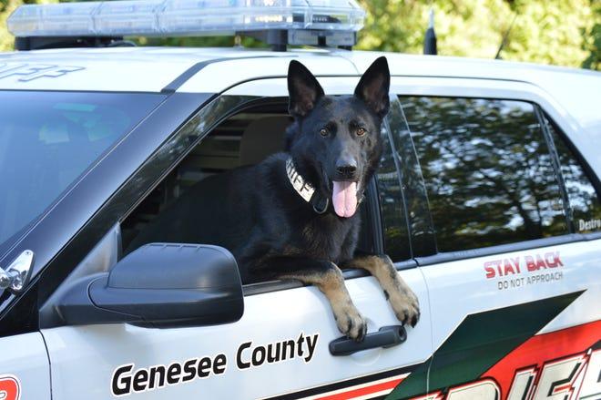 Genesee County Sheriff's K-9 Destro