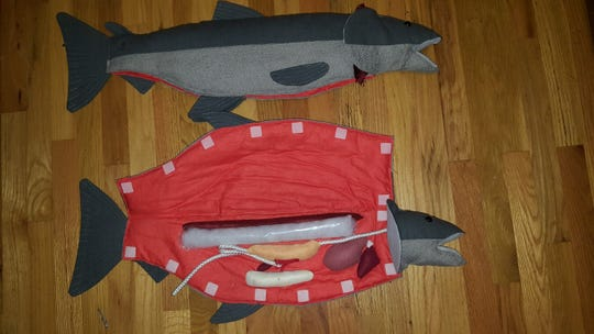 New-and-improved cloth dissection fish designed by Salem's Karoline Herkamp will be used as an educational tool by the ODFW's Salmon and Trout Enhancement Program.