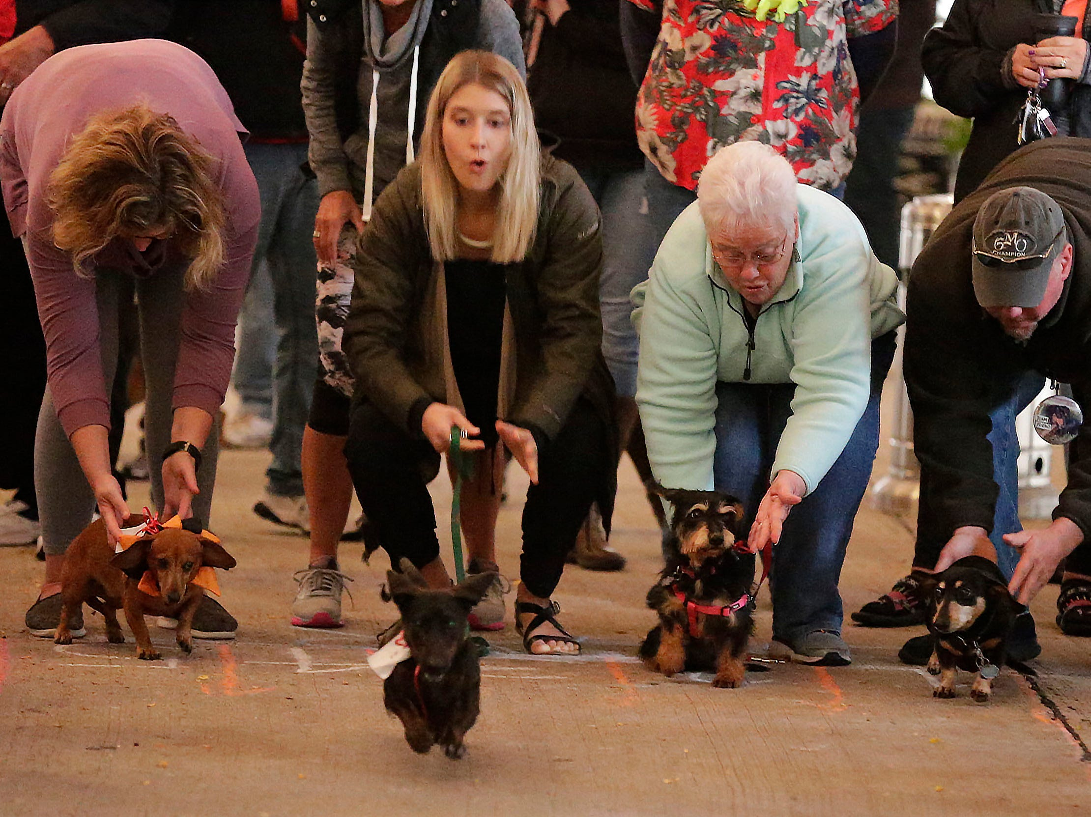 Owners watch and try and encourage their dogs to leave the starting line at the Weiner dog race at Oktoberfest at Al and Al's Saturday October 6, 2018, in Sheboygan, Wis.