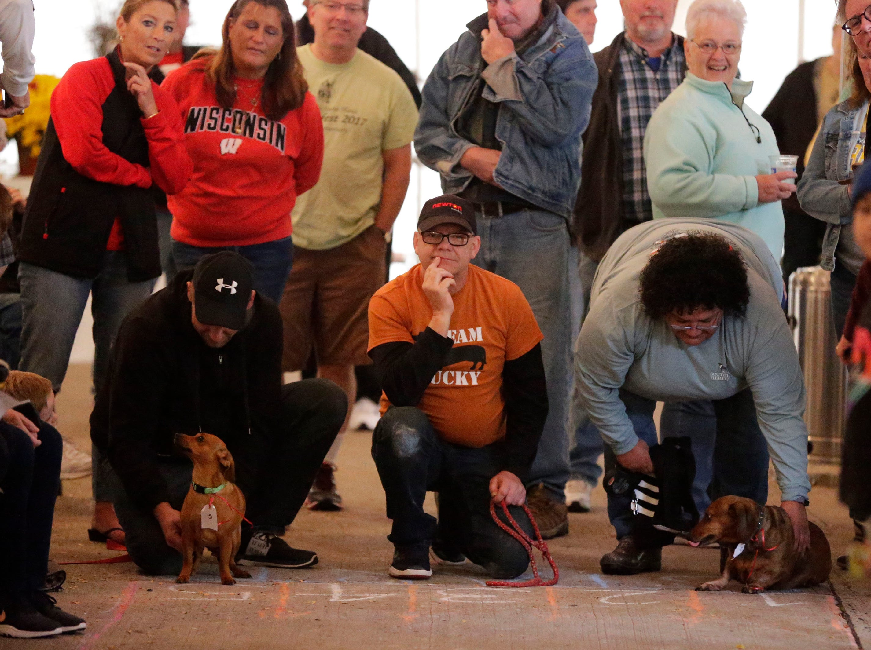 Owners and their dogs wait at the starting gate at Al and Al's Oktoberfest Weiner Dog race during their Oktoberfest festivities, Saturday October 6, 2018, in Sheboygan, Wis.