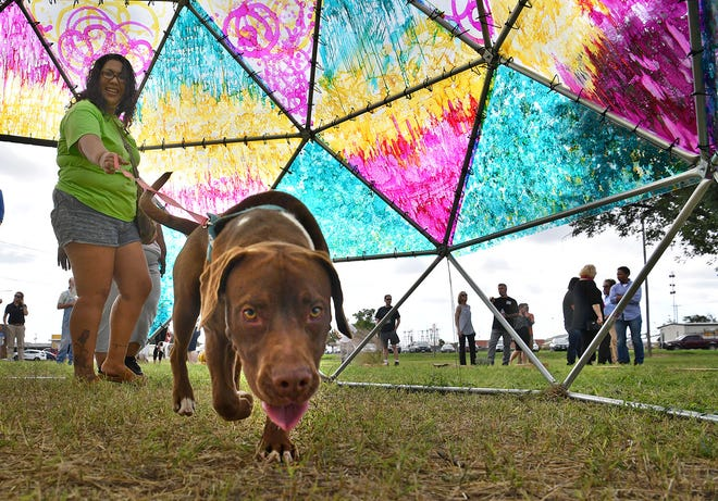 In this file photo, Vanessa Alonzo and her dog check out the Wichita Dome art installation. A final draft of the city of Wichita Falls animal ordinance is up for consideration at the city council meeting Tuesday. The ordinance includes requirements that all dogs and cats must wear a collar with identification and rabies tags.