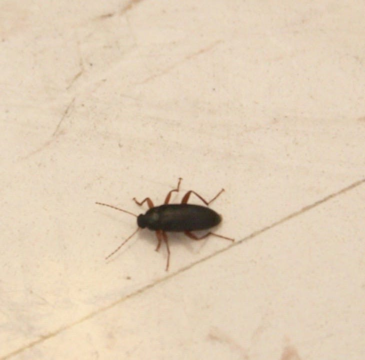Salley Hall insect infestation raises concern