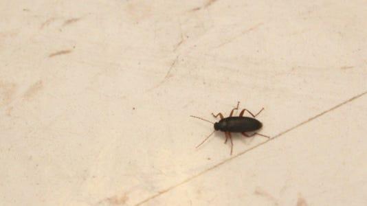 Roach 1