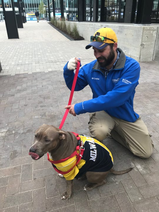 Nate Heller of Milwaukee and his girlfriend's dog, Allie, dressed up in Brewers gear to watch Sunday afternoon's Brewers-Rockies game at Oktoberfest in Fiserv Forum's outdoor area.