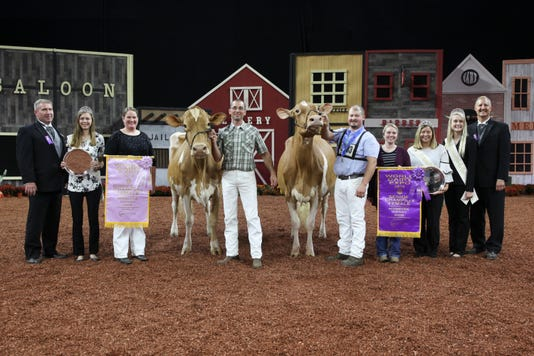 Grand Champion Guernsey Show