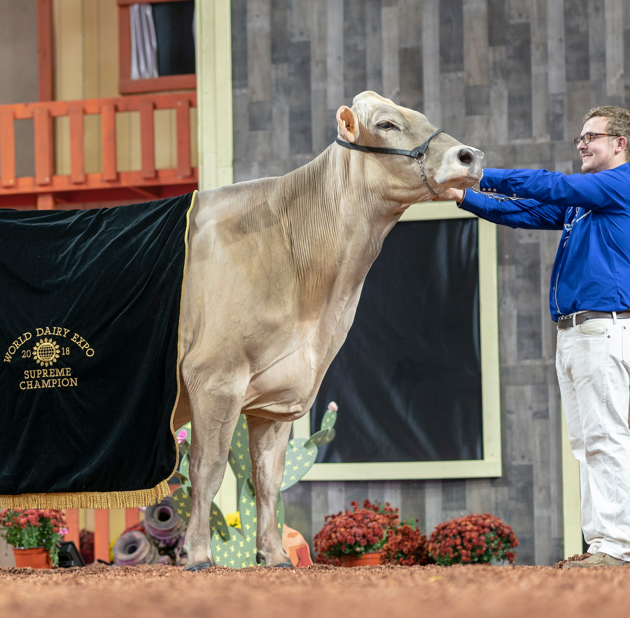 Cutting Edge T Delilah makes history at World Dairy Expo