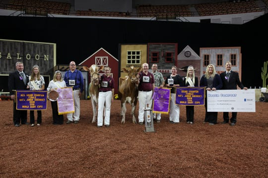 Designer placed first in her class before winning Intermediate Champion and finally, Grand Champion Female of the Junior Show. Reserve Intermediate Champion and Reserve Grand Champion of the Junior Show was awarded to the Senior Three-Year-Old Cow Warwick Manor Ty Carter, exhibited by Kaila, Karli and Kolby Stoltzfus of East Earl, Pa.