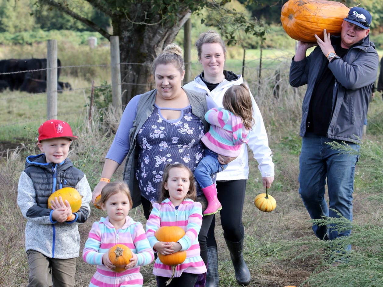 Pumpkins are chosen and hauled from the field at Hunter Farms.