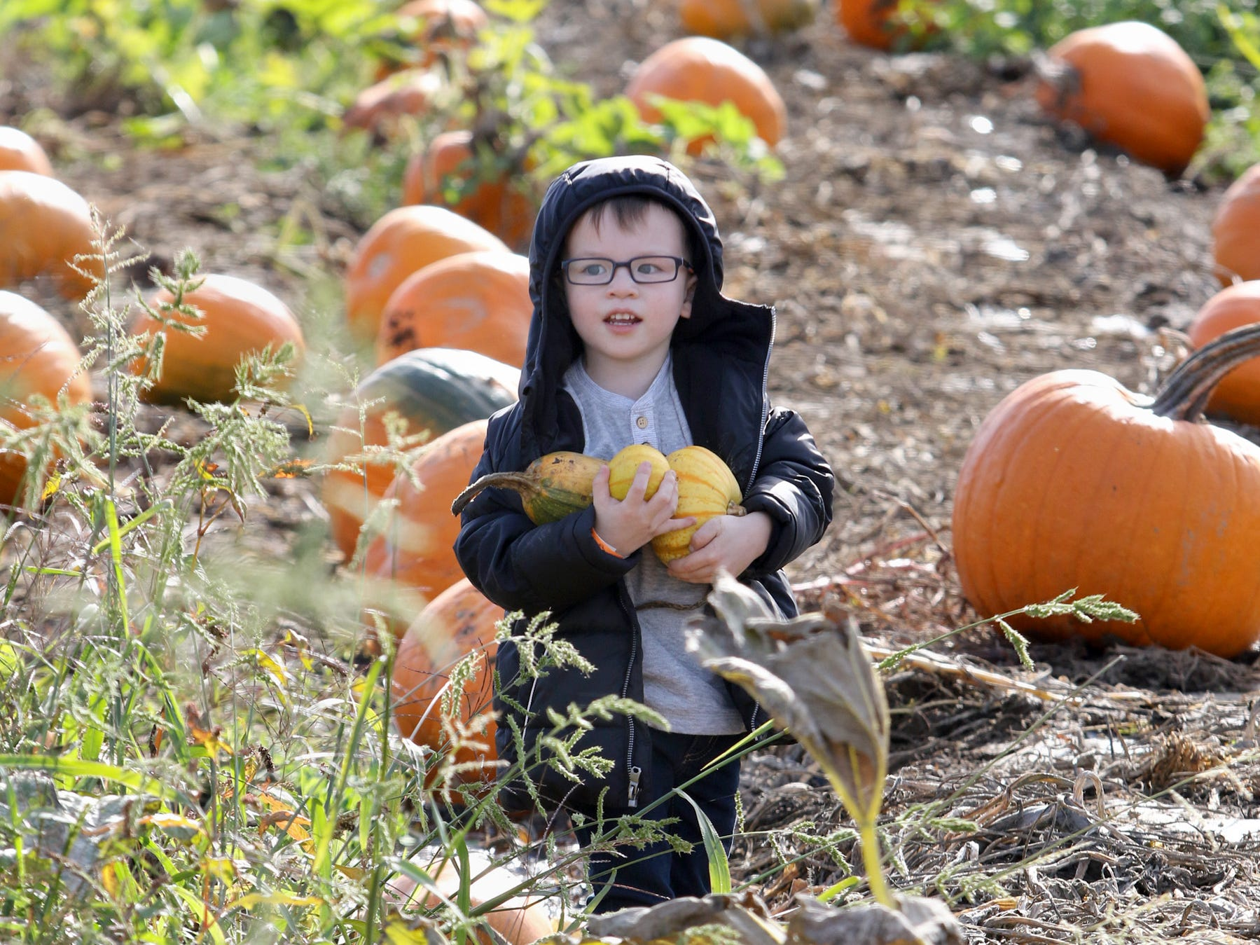 After wandering through the pumpkin patch at Hunter Farms, Sam Turgano, 4, of Port Orchard, thought three pumpkins were better than one.