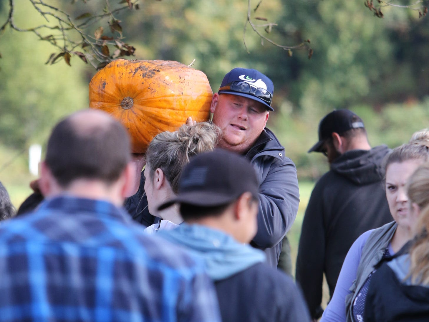 Pumpkins are chosen from the field at Hunter Farms.