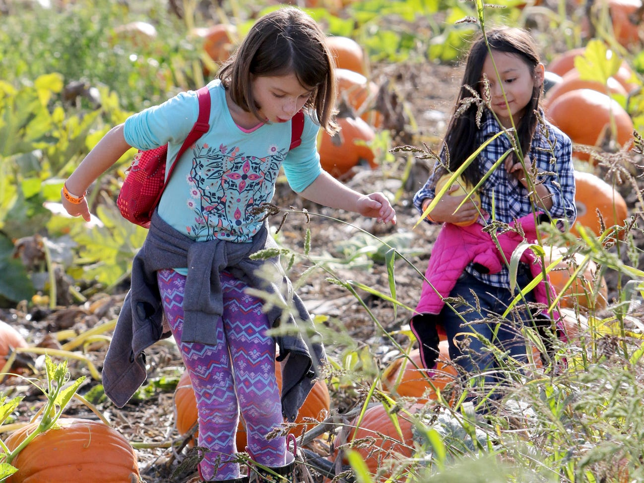 Rilee Fofelman, 8 left, and Logan Turgano, 6, tip toe through the pumpkin patch looking for the pumpkins of their choice at Hunter Farms.