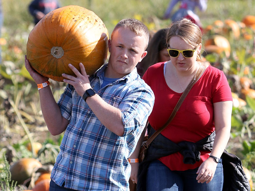 Chris Frost, (front) from Shjelton, and Shaye Kane, of Union, haul a  big pumpkin from the field.