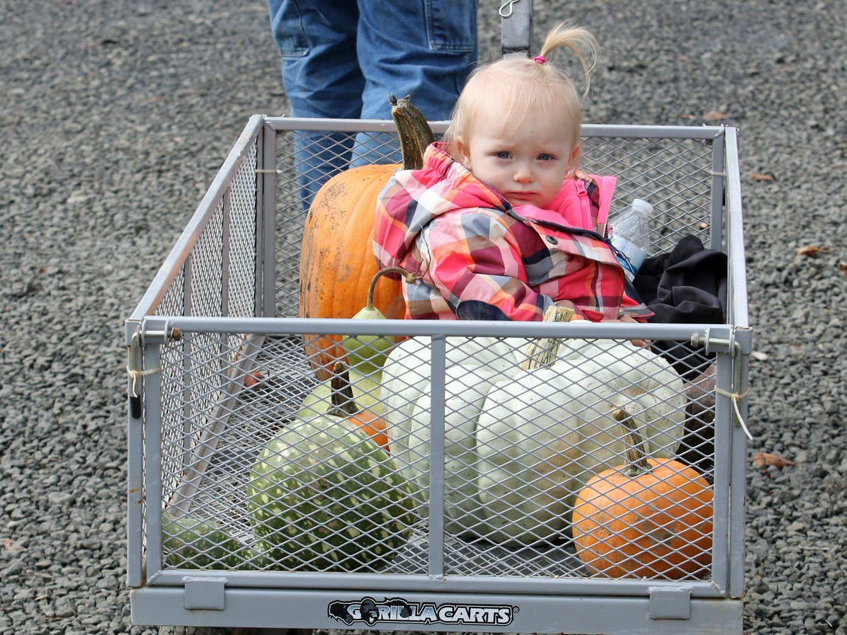 One year old Emma Saylor, of Seabeck, his hauled away with her pumpkin bounty by her father Brian at Hunter Farms near Union on Saturday, October 6, 2018.