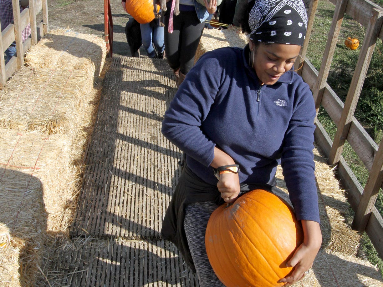 Wagon rides are offered to those who want to wander through the pumpkin patch to find a pumpkin at Hunter Farms.