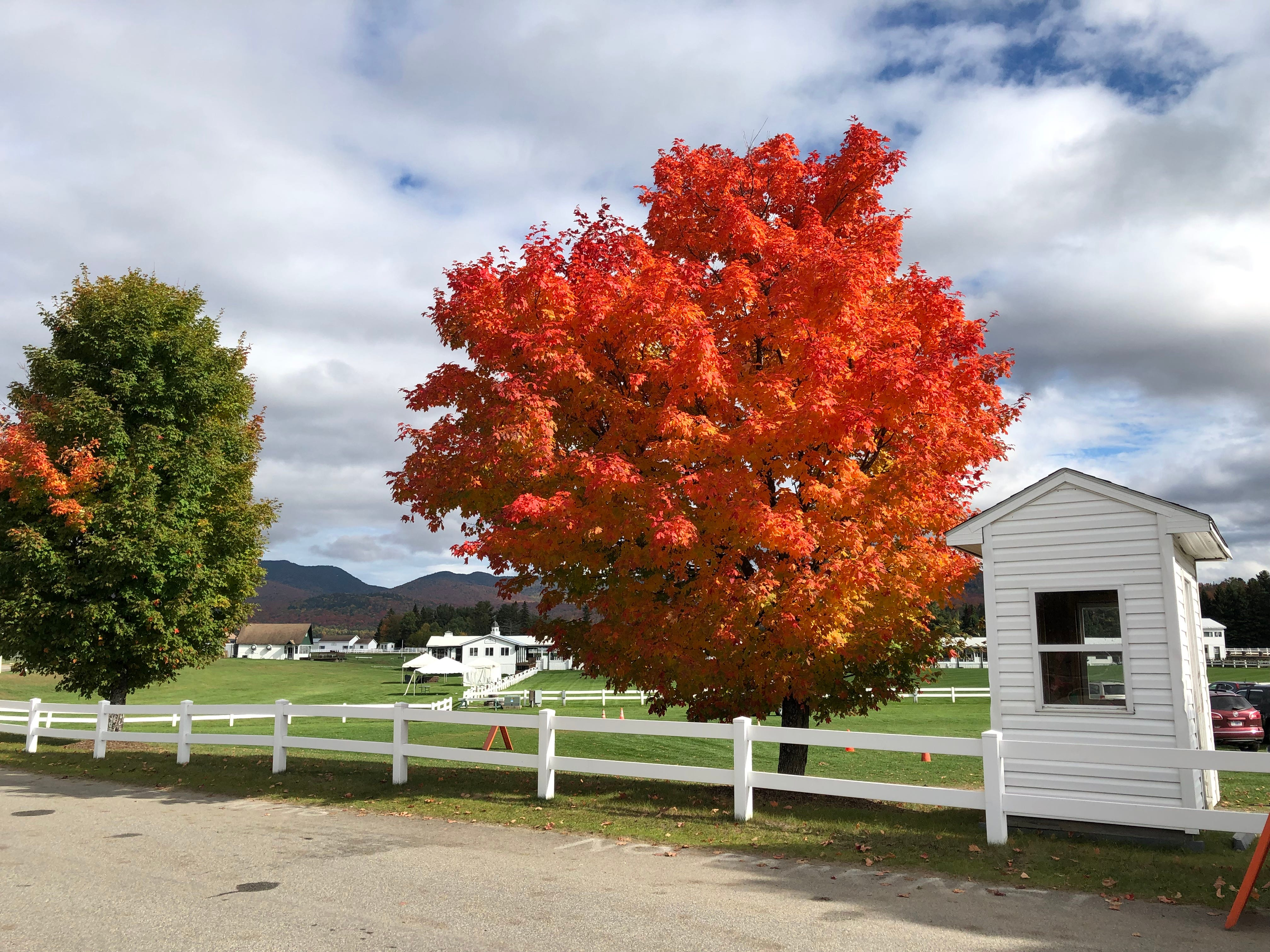 Foliage in Lake Placid, New York, on Oct. 6, 2018.