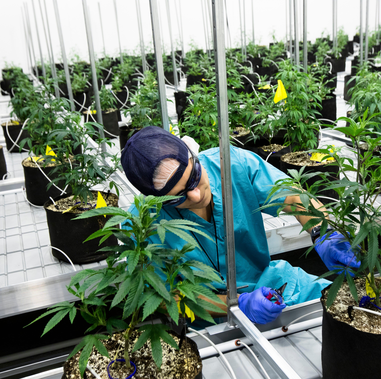 Look inside Cresco Labs medical marijuana operation in Southwest Ohio